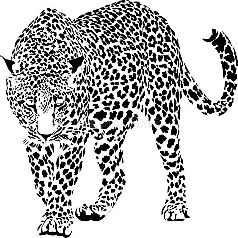 leopard royaltyfri illustrationer