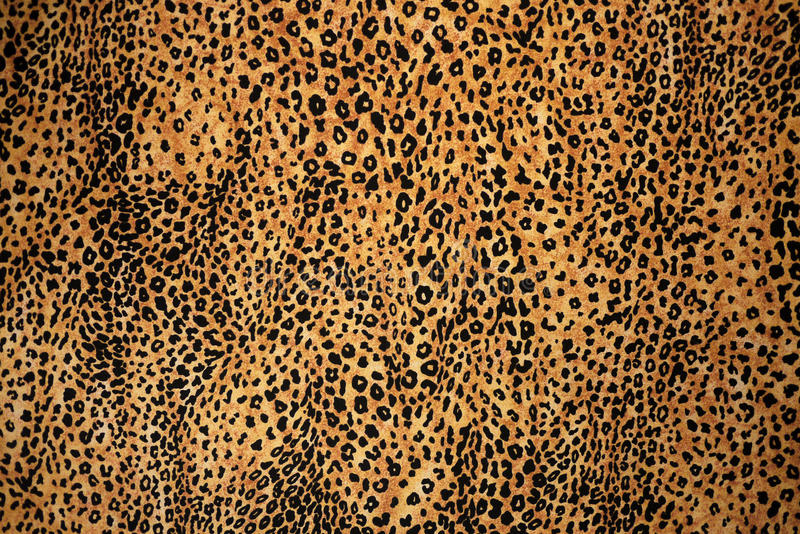 Leopard Animal Print Texture stock images