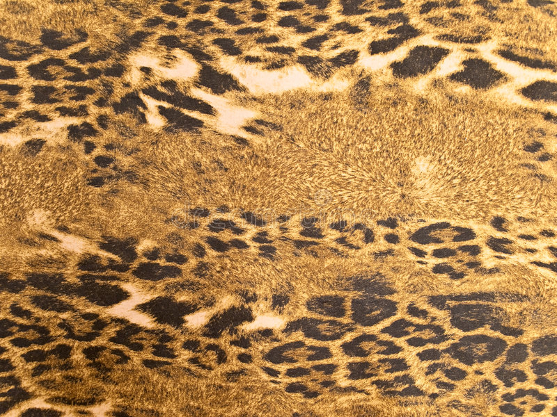 Leopard background. Photo of the brown wild leopard background royalty free stock photos