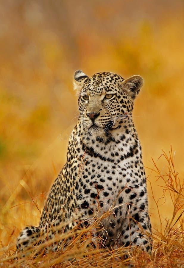 Leopard-Feuer lizenzfreies stockfoto