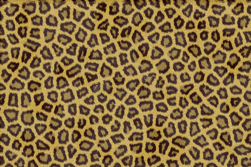 Download Leopard Fur Royalty Free Stock Photos - Image: 8701838