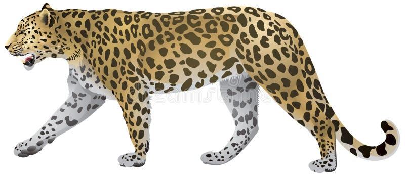 Leopard-Gehen stock abbildung