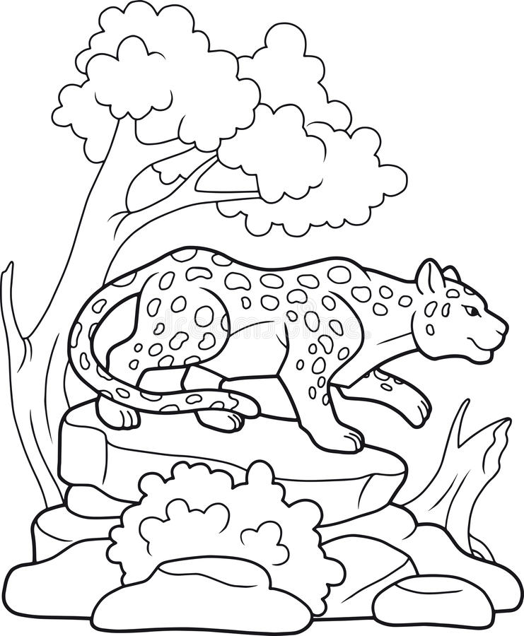 Leopard geht auf der Suche nach Opfer lizenzfreie abbildung