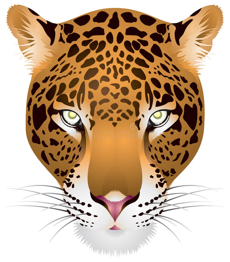 Leopard head in royalty free illustration