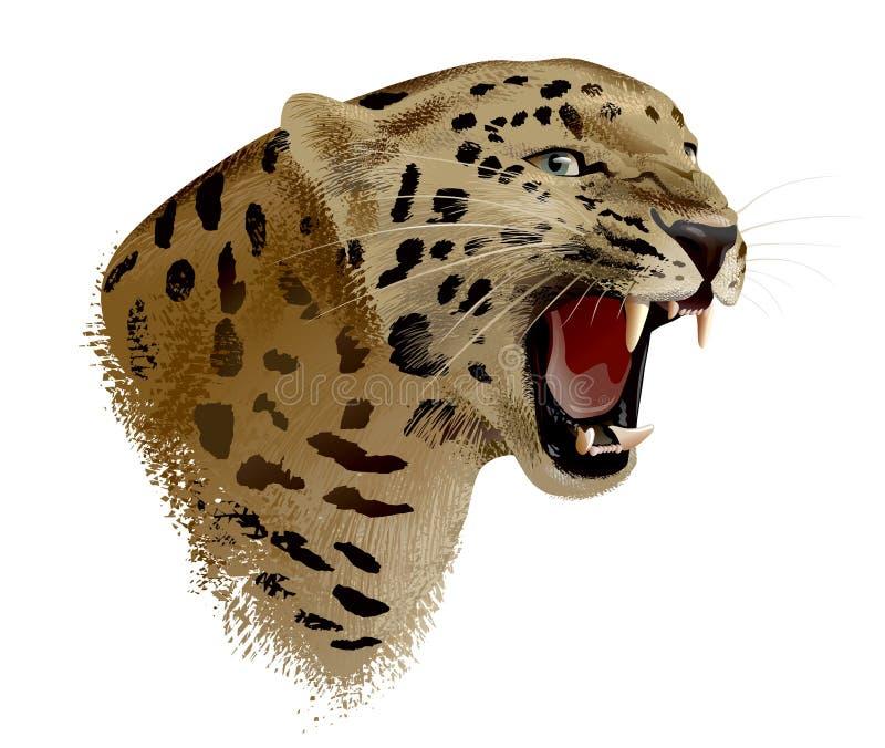 Leopard Head. Illustration. stock image