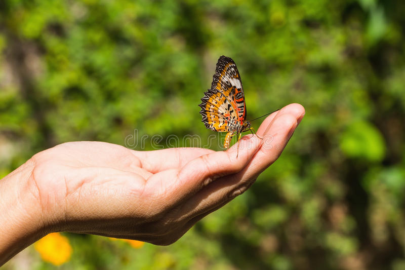 Leopard lacewing butterfly. The leopard lacewing (Cethosia cyane euanthes) butterfly on human hand royalty free stock image