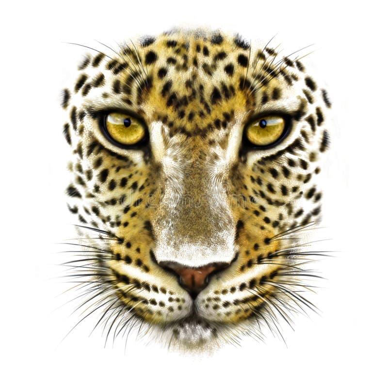 Leopard på vit arkivfoton