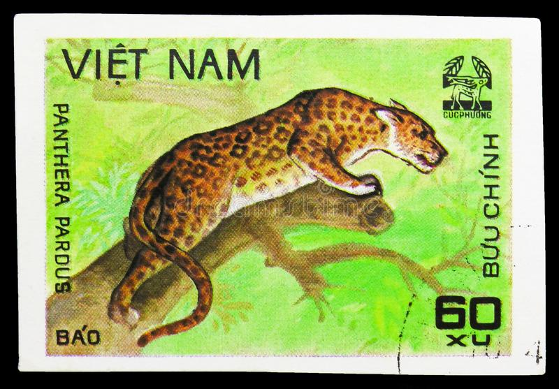 Leopard (Panthera pardus), Animals from Cuc Phuona Nati Forest serie, circa 1981. MOSCOW, RUSSIA - SEPTEMBER 26, 2018: A stamp printed in Vietnam shows Leopard ( stock image