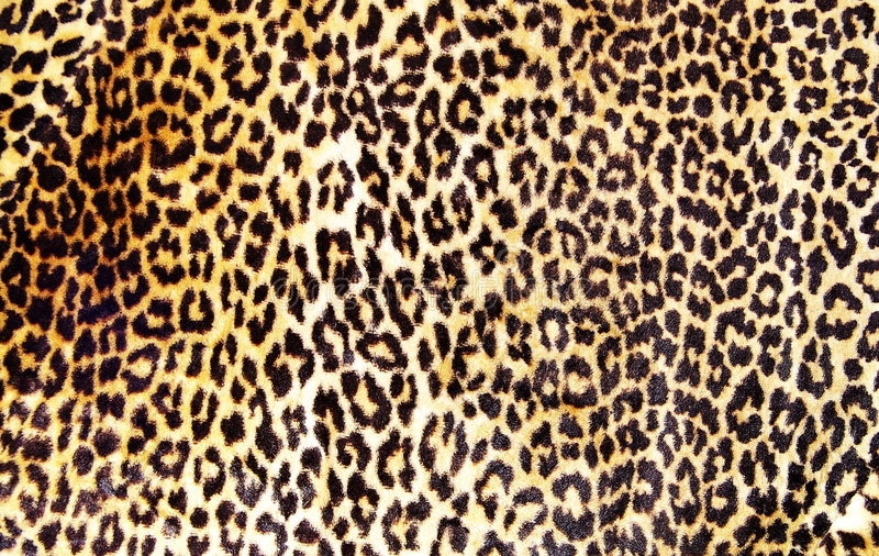 Leopard print stock image image of leopard soft furry 2462501 leopard print thecheapjerseys Gallery