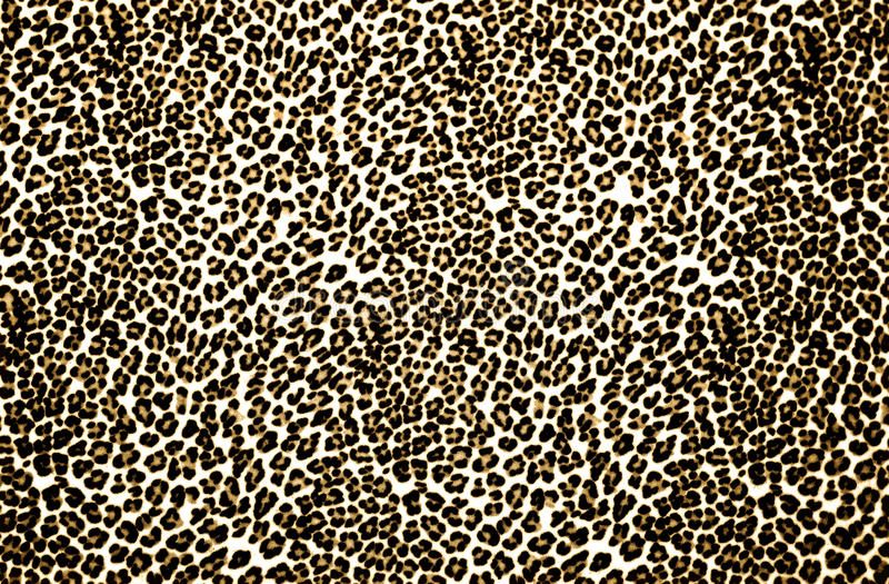 Leopard Print stock photos