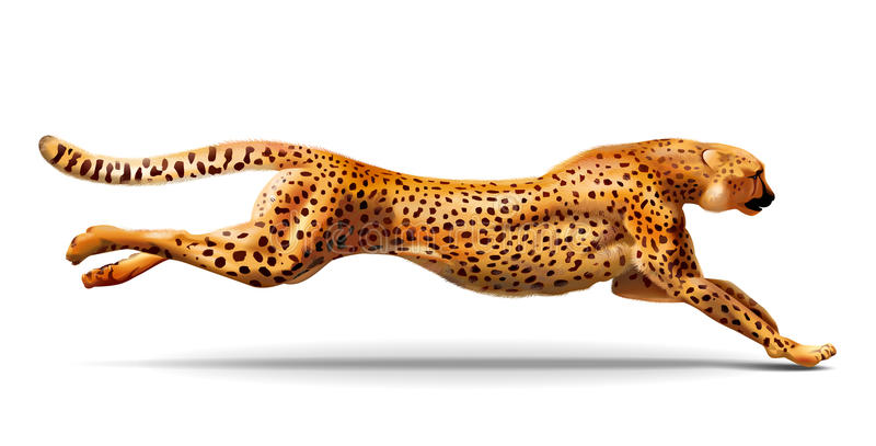 Leopard is running. Vector illustration stock photos