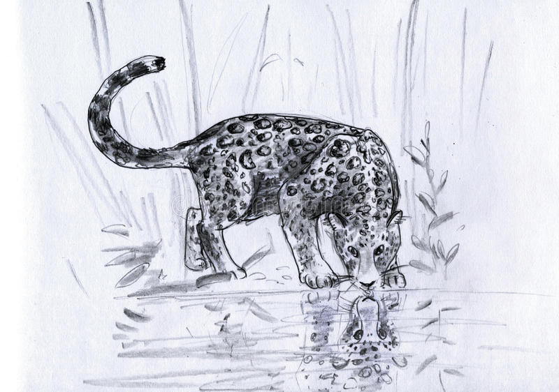Download Leopard's reflection stock illustration. Illustration of drawing - 20161110