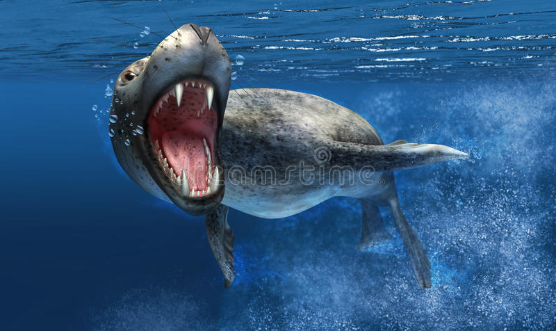 Download Leopard Seal Under Water With Close Up On Head And Open Mouth. Royalty Free Stock Images - Image: 30893159