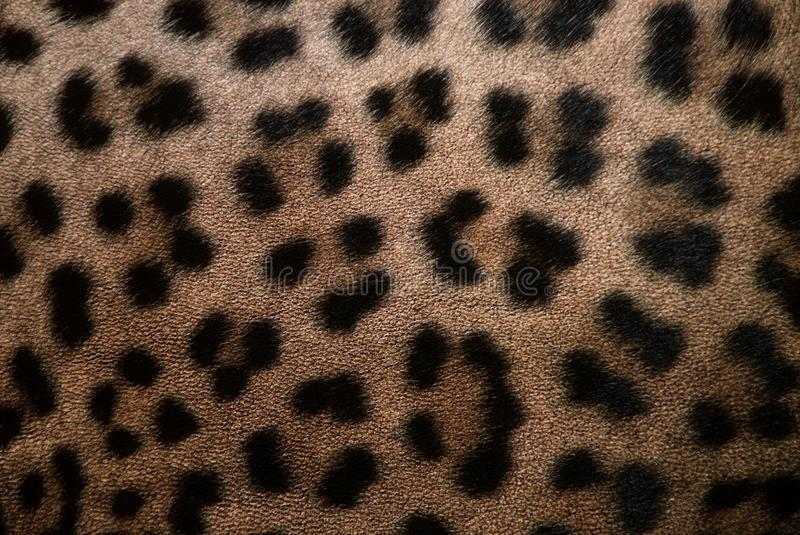 Leopard skin royalty free stock image