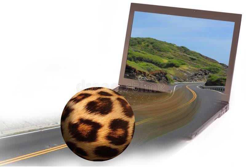 Leoparden mönstrde fotbollbollen arkivfoton