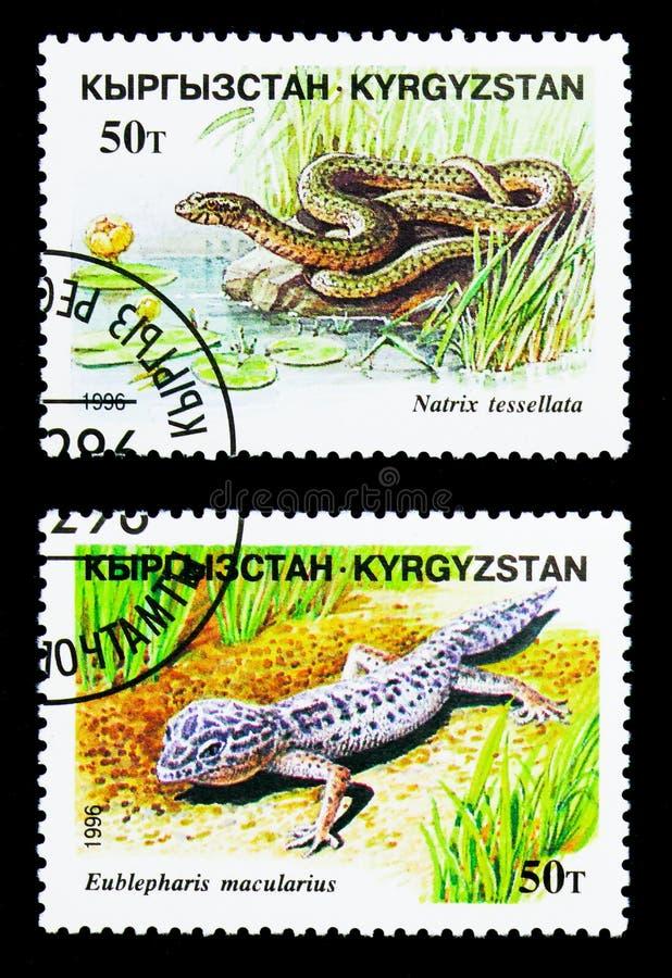 Leopardgecko (den Eublepharis maculariusen) och att tärna ormen (Natrixtessallataen), reptilserie, circa 1996 royaltyfri fotografi