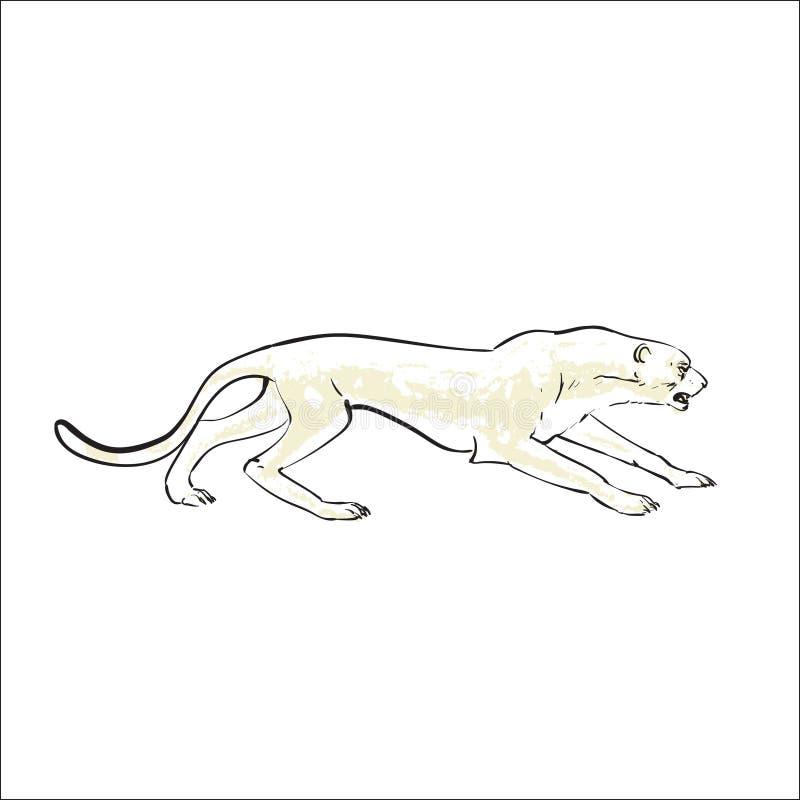 Leopardgepard versteckt Illustration lizenzfreie abbildung