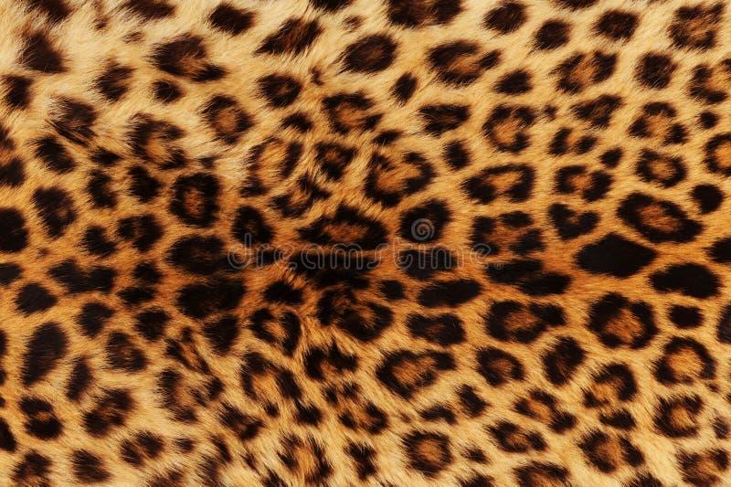 Leopardhintergrund lizenzfreies stockbild