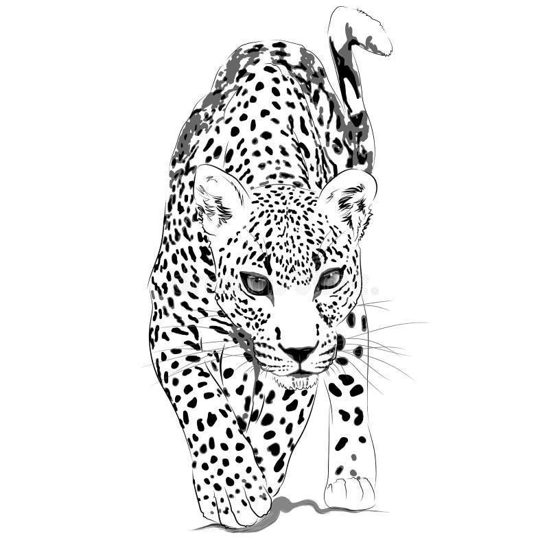 Leopardmonokromillustration royaltyfri illustrationer