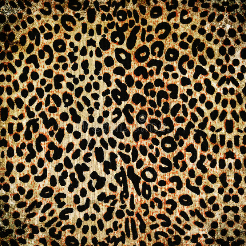 Leopardmuster stockfoto