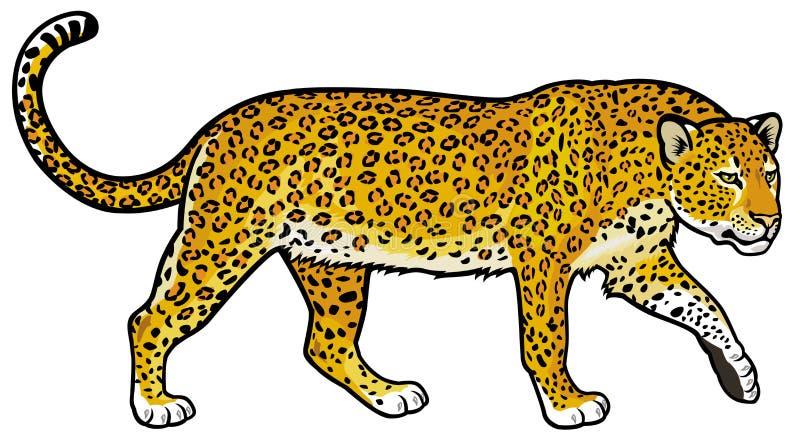 Leopardo illustrazione vettoriale