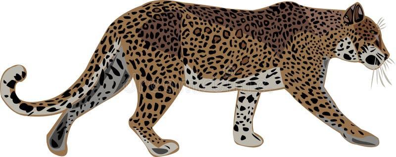 Leopardo africano y leopardo asiático ilustración del vector