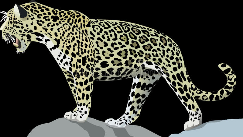 Leopardo, animal terrestre, Jaguar, animais selvagens imagens de stock royalty free