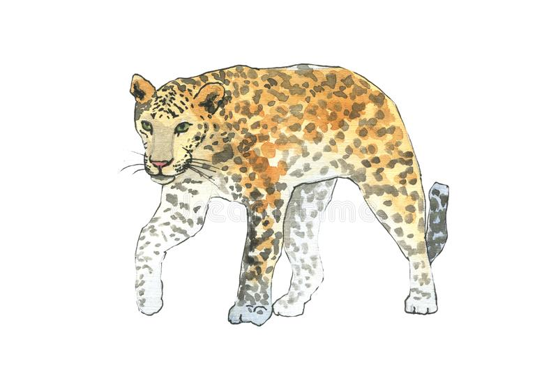 Leopardo, camminata dell'animale dell'illustrazione dell'acquerello del gatto del giaguaro illustrazione vettoriale