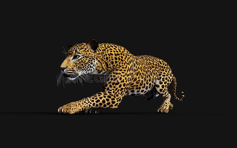 leopardo da ilustração 3d, Panthera Pardus, tigre ilustração stock