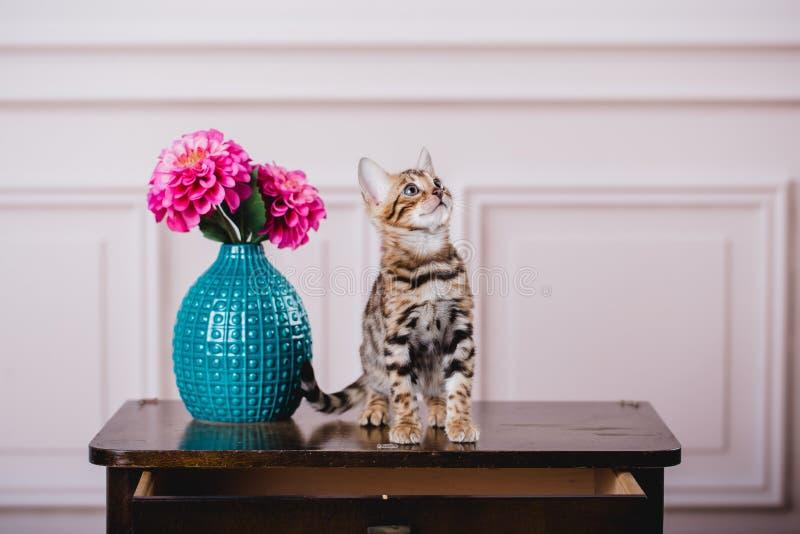 Leopardo de los babys de los gatos de Bengala imagen de archivo libre de regalías