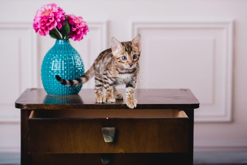 Leopardo de los babys de los gatos de Bengala imagenes de archivo