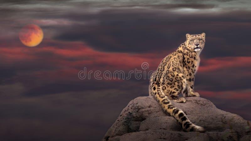 Leopardo delle nevi alla luce di luna