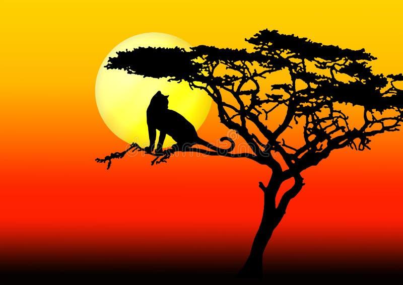 Leopardo en árbol en puesta del sol stock de ilustración