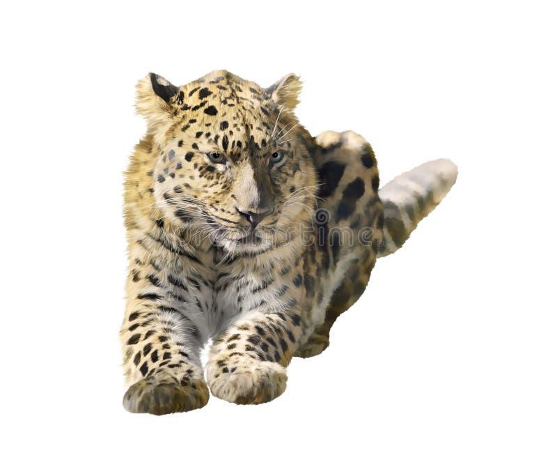 Download Leopardo isolado no branco ilustração stock. Ilustração de branco - 65580300