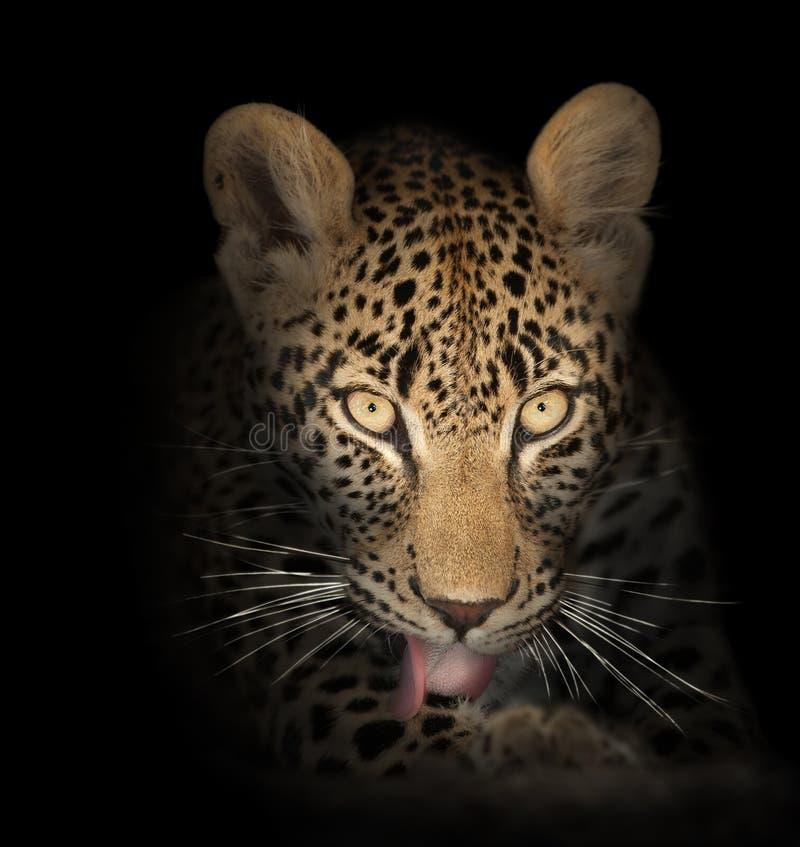 Leopardo nello scuro immagine stock libera da diritti