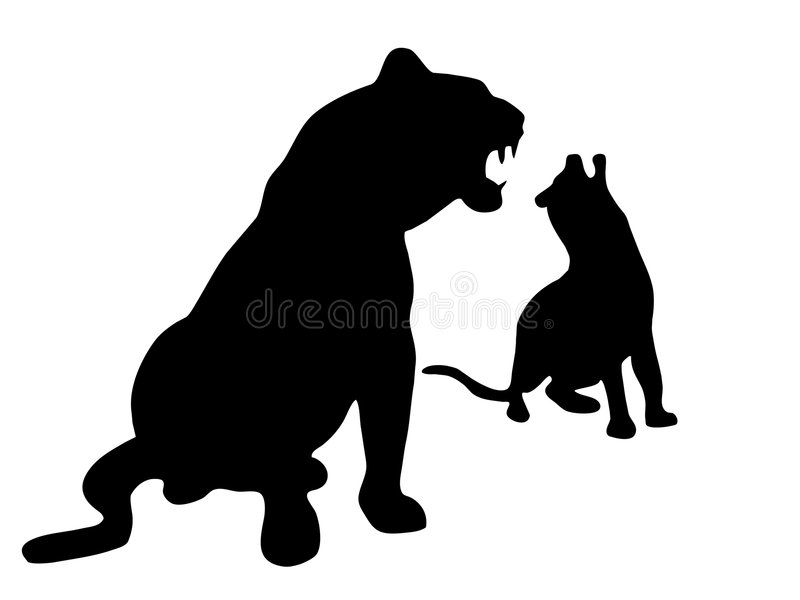 Leopards Stock Image