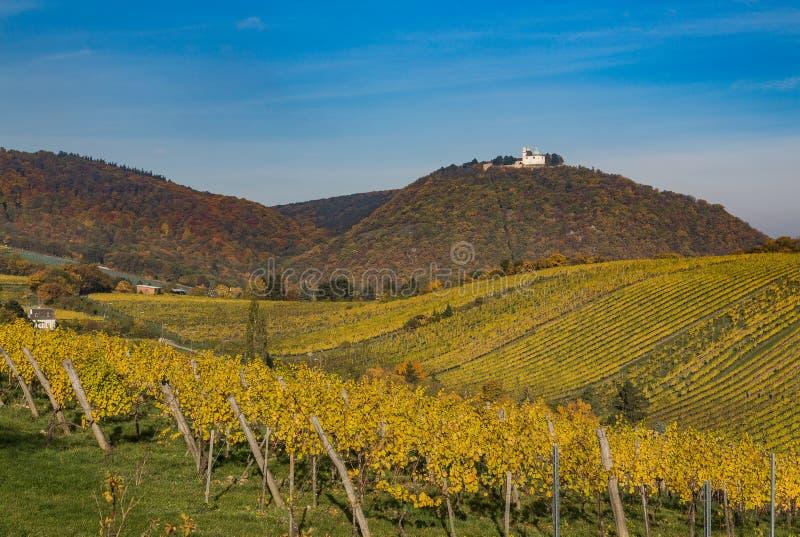 Leopoldsberg und Weinberge in Wien während des Herbstes lizenzfreie stockfotos