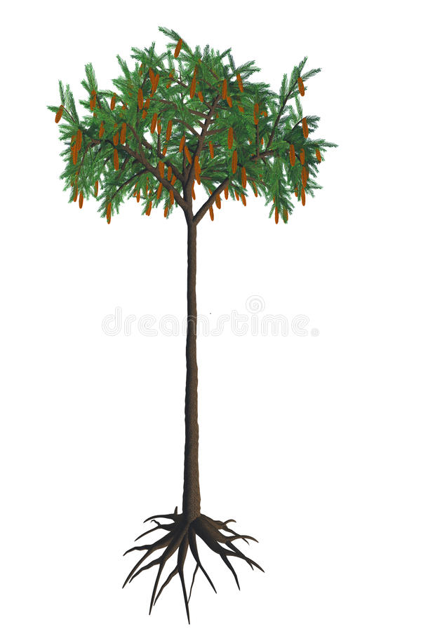 Lepidodendron aculeatum Tree. Lepidodendron was a giant lycopod tree that formed the huge forests of the Carboniferous to Permian Periods stock illustration