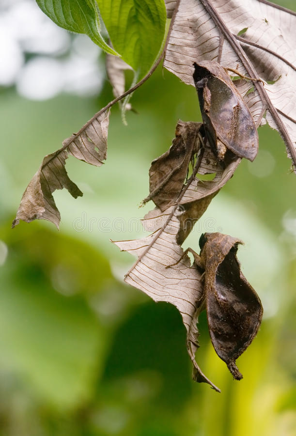 Lepidotteri immagine stock libera da diritti