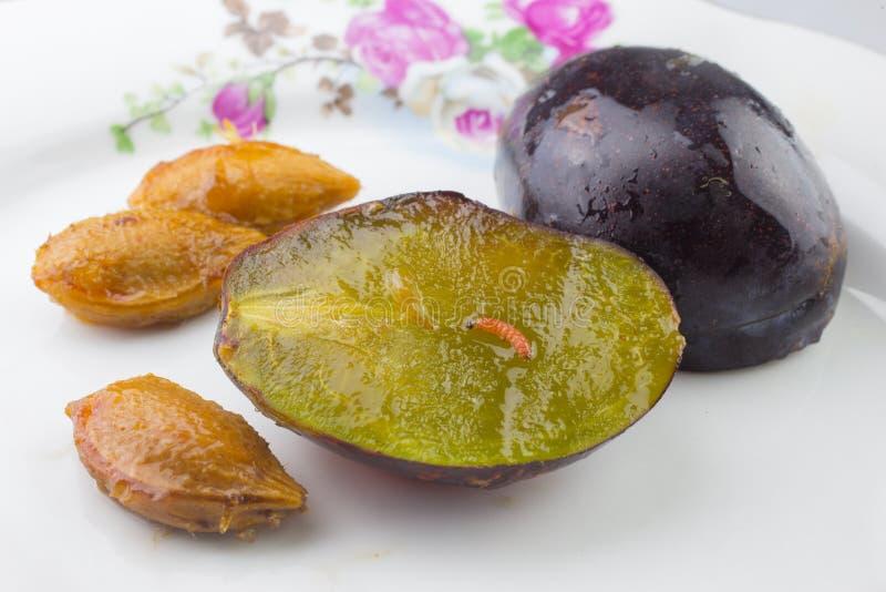Lepidottero della frutta della prugna immagini stock