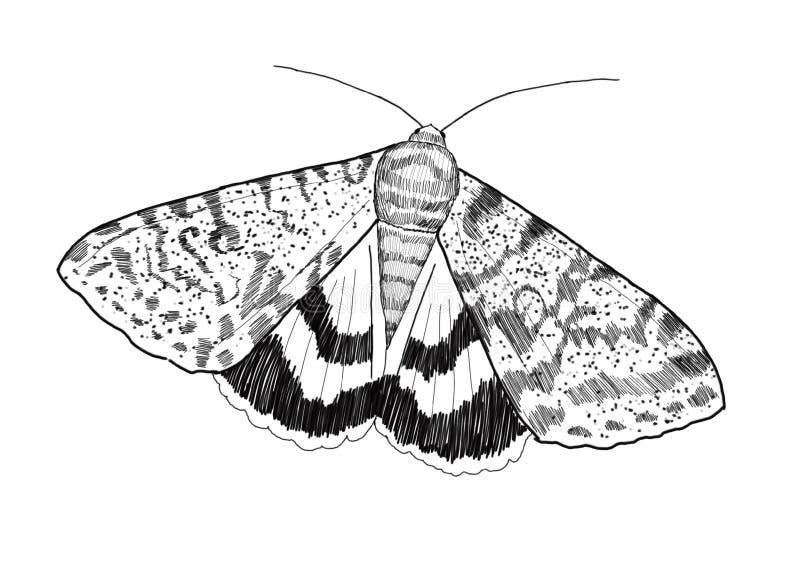 Lepidottero - disegno digitale - Catocala fotografia stock