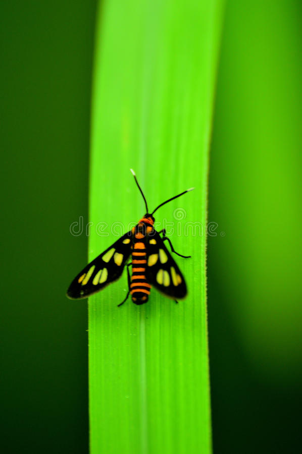 Lepidottero sulla foglia fotografia stock