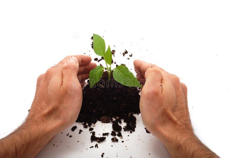 lepiej zielona środowiska roślinne fotografia stock