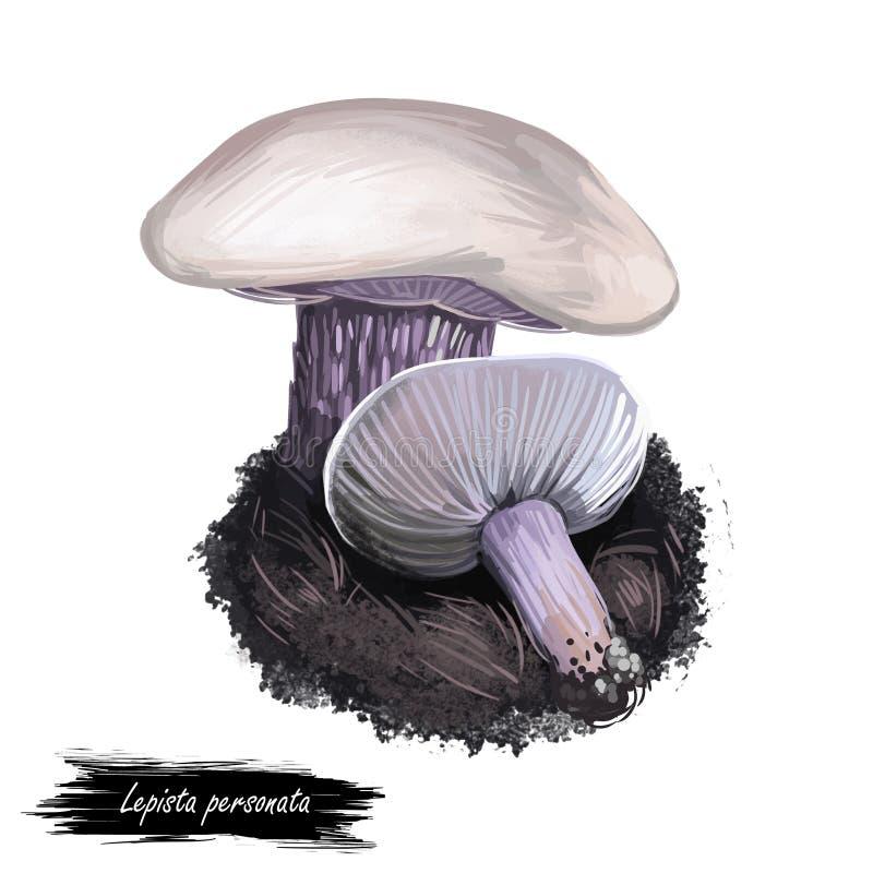 Lepista personata digital art illustration. Clitocybe saeva mushroom watercolor print realistic drawing. Tricholoma amethystinum stock illustration