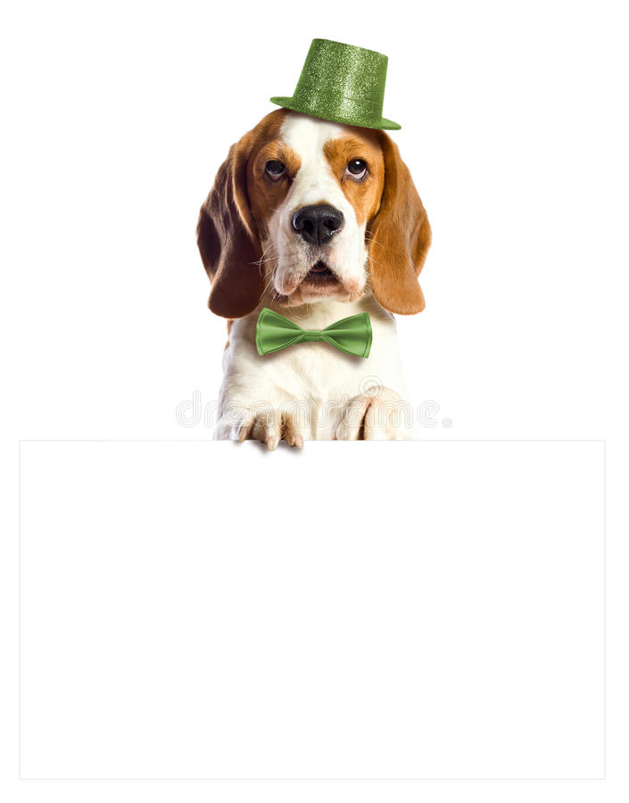 Leprechaun imagem de stock