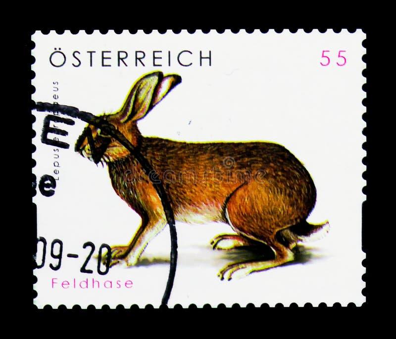 Lepuseuropaeus för europeisk hare, djurlivserie, circa 2008 royaltyfri fotografi