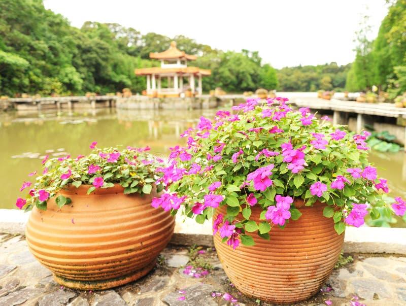 lerablomkrukaträdgård royaltyfria foton