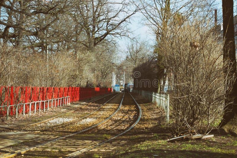 Lerig bana - gyttjapöl på en skogväg med höstblad rött staket i mitt av höstträd royaltyfri foto