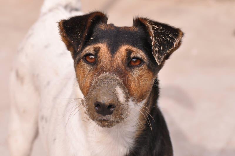 lerig hund royaltyfri fotografi