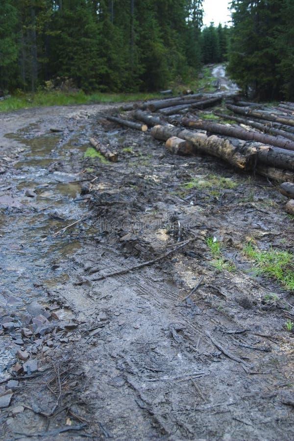 lerig väg för skog fotografering för bildbyråer